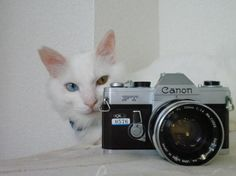 cat and camera2