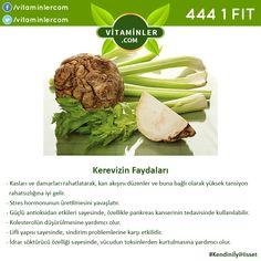 Herbalism, Cabbage, Vitamins, Beef, Healthy Recipes, Vegetables, Tips, Food, Health