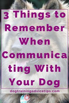 Teaching your dog is mostly about building your relationship with your pet dog as well as implementing boundaries. Be firm but consistent and you will see extraordinary results when it comes to your dog training adventures. Agility Training For Dogs, Puppy Training Tips, Dog Agility, Chihuahuas, Beagles, Pitbulls, American Alsatian, Hypoallergenic Dog Food, Puppies Tips
