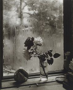 Josef Sudek, The Last Rose of Summer (from The Window of My Studio)