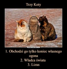 1. Obchodzi go tylko koniec własnego ogona2. Władca świata 3. Lizus – Happy Animals, Animals And Pets, Funny Animals, Avatar Ang, Weekend Humor, Funny Mems, Quality Memes, Wtf Funny, Funny Comics