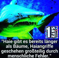"""""""#Haie gibt es bereits länger  als #Bäume Haiangriffe  geschehen großteilig durch menschliche Fehler."""" / 1satz.com"""