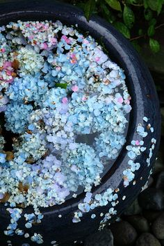 Blue Hydrangeas & Water Feature