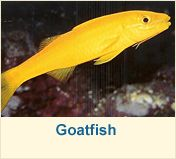 Salt Water Fish | Marine Life | Tropical Fish | Reef Fish & Salt Water Tank Fish Salt Water Fish, Salt And Water, Fresh Water, Saltwater Tank, Saltwater Aquarium, Two Fish, Water Animals, Marine Fish, Little Fish