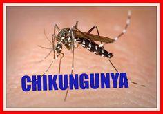 नीचे दी गई 10 चीज़े खाने से डेंगू की क्या औकात वो आपको छू पाये