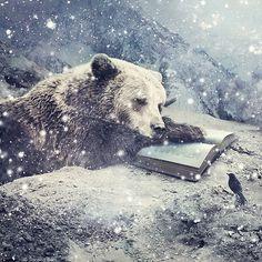 Bear reading in winter