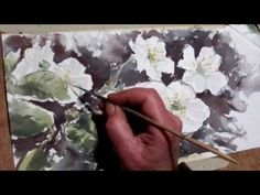 Hedwig's Art, white flowers, watercolor; Potentilla-Abbotswood, - YouTube