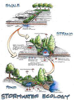 Stormwater Ecology- collecteur d'eau de pluie