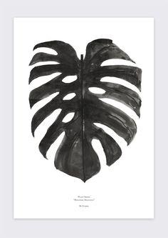 (by) Garmi Monstera Deliciosa Print - black and white 50x70cm