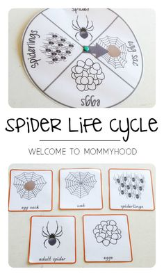 Halloween themed activities: spider life cycle printables by Welcome to Mommyhood #preschoolactivities, #halloweenactivities, #homeschool, #montessori