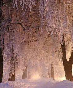 """bluepueblo: """" Frozen Forest, Poland photo via swarvoski """" ~♥♥♥~"""