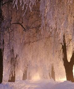 Frozen Forest, Poland photo via swarvoski