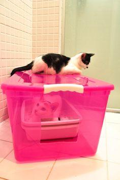 Se você tem bigatos (dois gatos), assim como eu, já deve ter cansado de buscar alternativas que sejam econômicas e eficientes para conter o cheiro forte da urina dos bichanos. Ou… não teve pa…