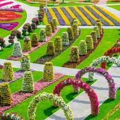 Dubai Miracle Garden - while beautiful, it shouldn't exist! It is such a waste of water and resources!