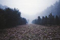 cold morning walks