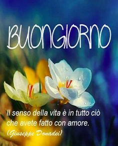 Italian Memes, Italian Phrases, Photo D Art, Flowers For You, Inspirational Thoughts, Say Hello, Good Morning, Photos, Words