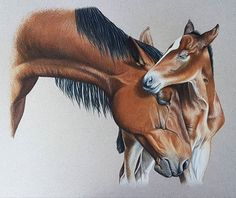 "Finally finishing up this piece I am tentatively calling ""A Mother's Love"" Prismacolors on 9""x12"" Canson Mi-Teintes pastel paper. #prismacolors #realism #coloredpencil #coloredpencilart #coloredpencilartist #horseart #equineart #saskartist"