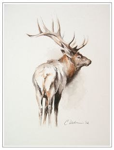 "Elk Study,  12 x 9""  - Fall Bull Elk Study, Original Art in Soluble Sepia and Willow Pencil (unframed)"