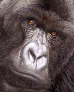 Jason Morgan - Peintre animalier - Gorille en gros plan - Peinture à l'huile