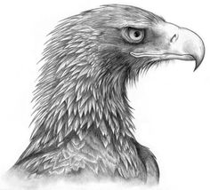 How to Draw a Eagle | Wedge-Tailed Eagle commission by *Black-Charizard on deviantART