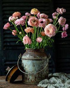 Savoring Life's Sweetness Ranunculus, Beautiful Flowers, Wedding Flowers, Floral Wreath, Wreaths, Canning, Sweet, Plants, Instagram