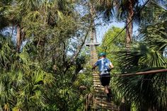 If you've always wanted a bird's eye view of Florida's lush scenery, the Canopy Walk is perfect for you.