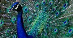 Meet the World's Most Beautiful Birds