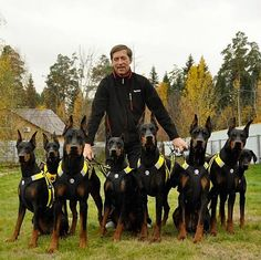 Don't mess with a man and his 8 Doberman Pinschers.