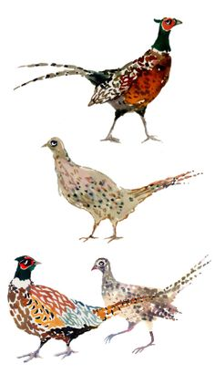PHEASANT NOTECARDS happymenocal