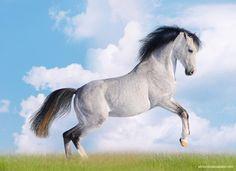 Fotos de caballos – X - http://www.elmundodelcaballo.com/caballos/fotos-y-videos/fotos-de-caballos-x/