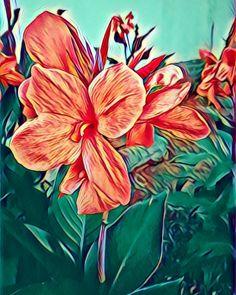 Canna lillies @prisma
