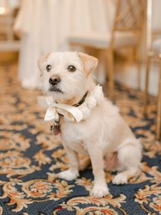 Flower Dog Collar Pets in Weddings | photography by http://www.rebeccayaleportraits.com