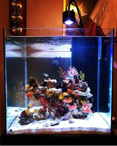 10 Tips on Designing a Freshwater Nature Aquarium Nano Aquarium, Nature Aquarium, Aquarium Design, Marine Aquarium, Reef Aquarium, Saltwater Fish Tanks, Saltwater Aquarium, Nano Reef Tank, Reef Tanks