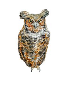 Items similar to Great Horned Owl Archival Quality Print - From the Original Watercolor on Etsy Owl Bird, Bird Art, Tole Painting, Painting & Drawing, Great Horned Owl, Creatures Of The Night, Watercolor And Ink, Art Reference, Birds