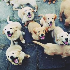 this is happiness! #Golden #Retrievers