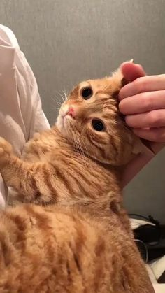 Pics Of Cute Cats, Cute Baby Cats, I Love Cats, Crazy Cats, Cool Cats, Kittens Cutest, Cats And Kittens, Ugly Cat, Cute Cat Memes