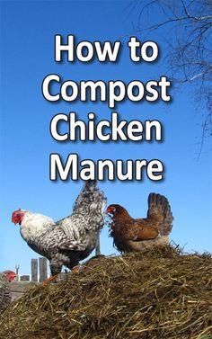 Compost Chicken Manure