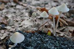 #Wald und #Pilze im #Herbst
