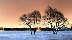 Trees от Roman Alyabev // Роман Алябьев