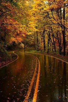 Autumn - Ready for this drive one cool Saturday morning :)