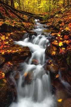 Autumn Cascade - Along the Bruce Trail, Pretty River Provincial Park near Collingwood, Ontario