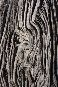 Tree Bark Textures with intricate patterns - organic texture ...
