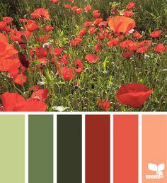 Poppy palette far left and far right for hall bath/office/basement