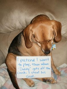 60 Ideas Funny Dogs With Signs Of Shame Puppys Cute Funny Dogs, Cute Funny Animals, Funny Babies, Silly Dogs, Animal Jokes, Funny Animal Memes, Funny Memes, Hilarious, Cat Shaming