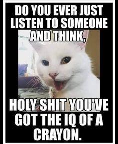 Funny Cat Memes, Funny Cartoons, Haha Funny, Funny Cute, Hilarious, Funny Stuff, Funny Kitties, Pet Stuff, Schmuck
