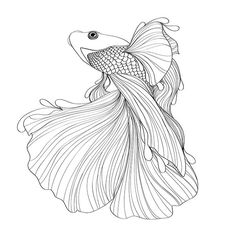 how to draw a fish tail from above - ค้นหาด้วย Google