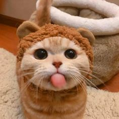 Agility Training For Dogs, Dog Agility, Training Your Dog, Cute Animal Memes, Cute Animals, Cute Cats, Funny Cats, Funny Cat Wallpaper, Funny Cat Pictures