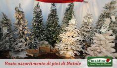 Così belli che vanno a ruba...vasto assortimento di alberi di Natale