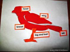 Bird themed learning activities and free printables for kids.