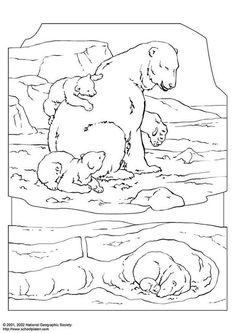 Polar Bear Coloring Page - (edupics)
